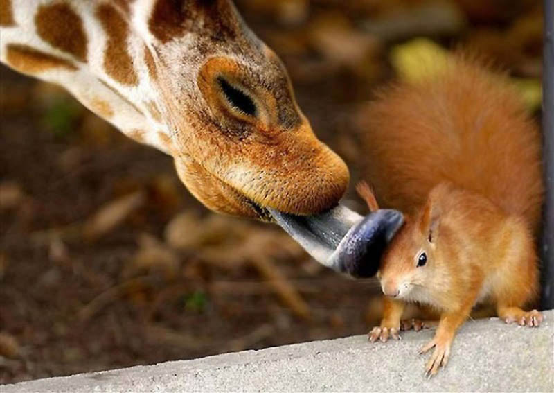 Timing perfeito - Fotos animais tiradas no momento exato 30