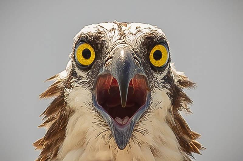 Timing perfeito - Fotos animais tiradas no momento exato 31