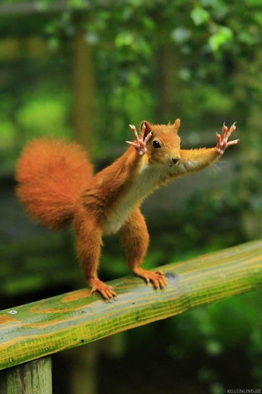 Timing perfeito - Fotos animais tiradas no momento exato 33