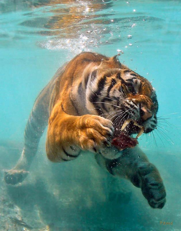 Timing perfeito - Fotos animais tiradas no momento exato 34