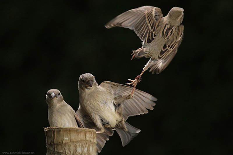 Timing perfeito - Fotos animais tiradas no momento exato 35