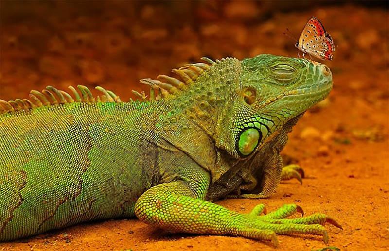 Timing perfeito - Fotos animais tiradas no momento exato 36