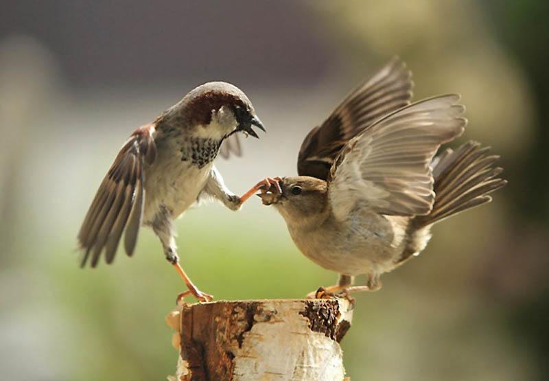 Timing perfeito - Fotos animais tiradas no momento exato 37