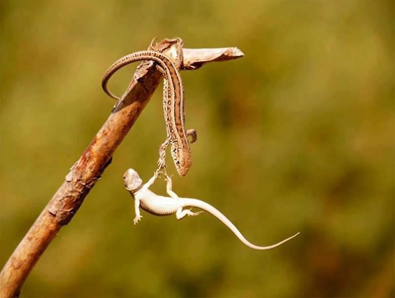Timing perfeito - Fotos animais tiradas no momento exato 38