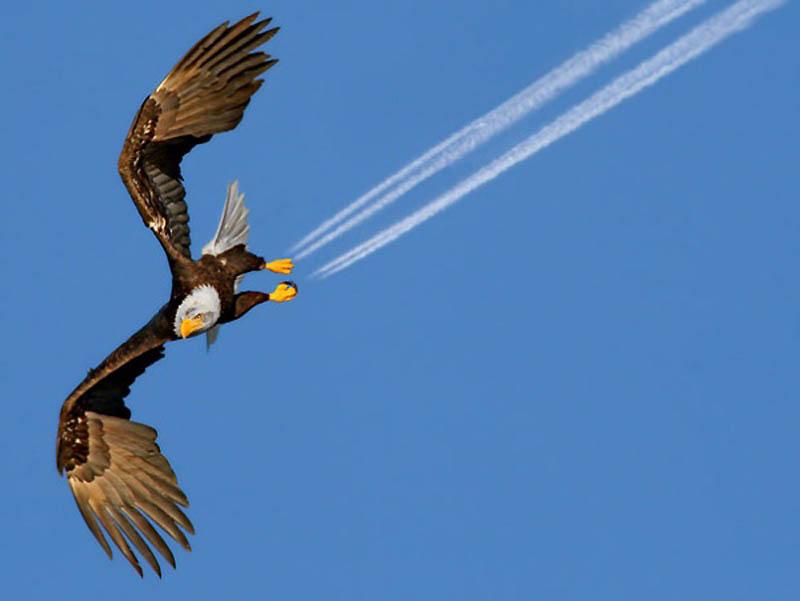Timing perfeito - Fotos animais tiradas no momento exato 39