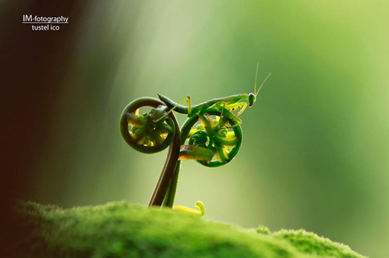 Timing perfeito - Fotos animais tiradas no momento exato 40