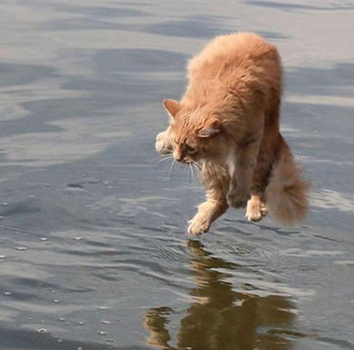 Timing perfeito - Fotos felinas tiradas no momento exato 5 01