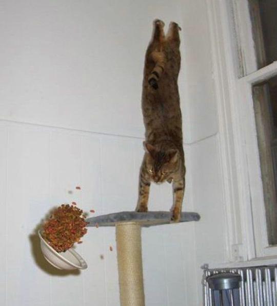 Timing perfeito - Fotos felinas tiradas no momento exato 5 02
