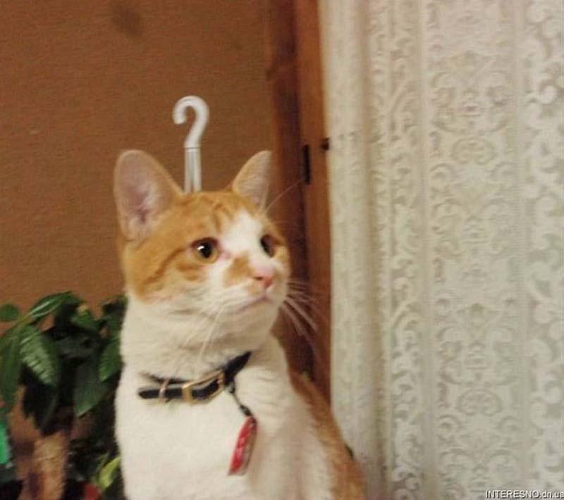 Timing perfeito - Fotos felinas tiradas no momento exato 5 03