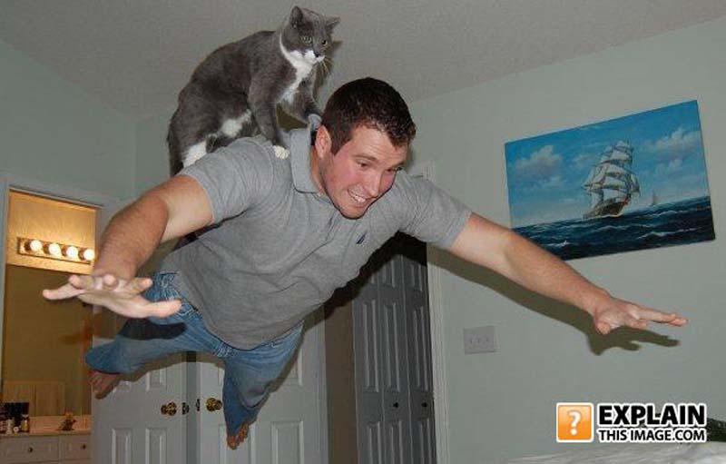 Timing perfeito - Fotos felinas tiradas no momento exato 5 04