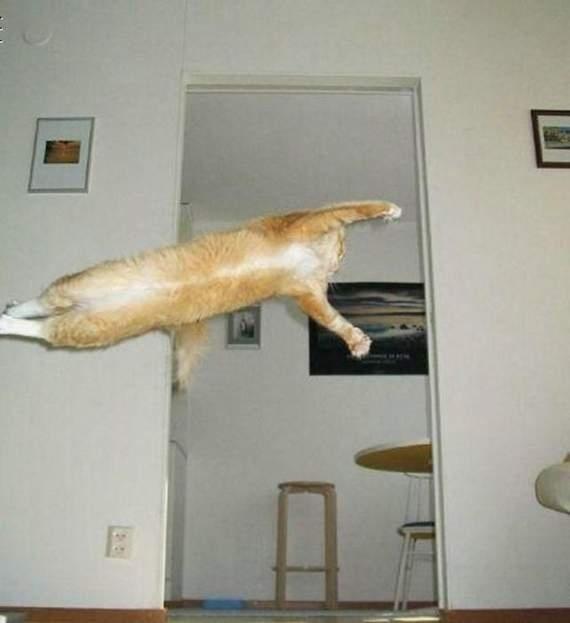 Timing perfeito - Fotos felinas tiradas no momento exato 5 05