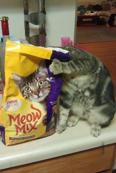 Timing perfeito - Fotos felinas tiradas no momento exato 5 07
