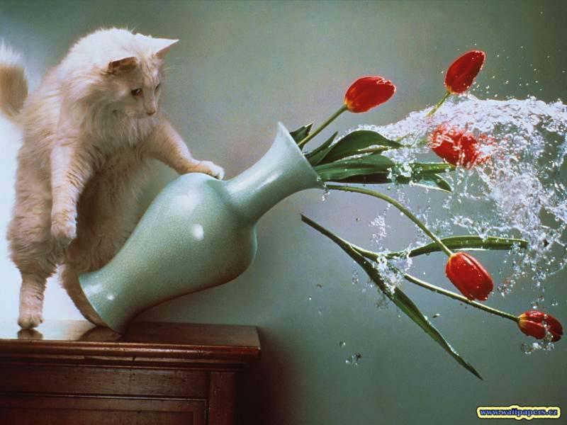 Timing perfeito - Fotos felinas tiradas no momento exato 5 10
