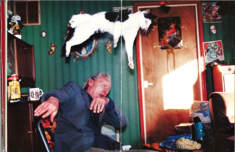 Timing perfeito - Fotos felinas tiradas no momento exato 5 11
