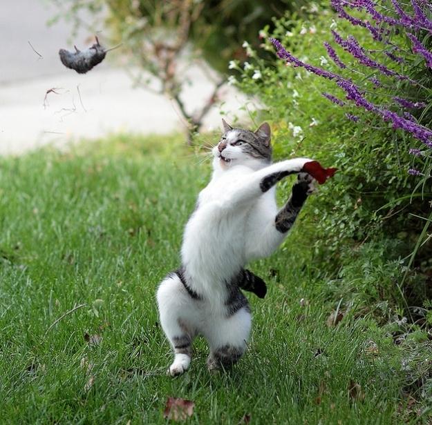 Timing perfeito - Fotos felinas tiradas no momento exato 5 12