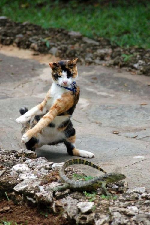 Timing perfeito - Fotos felinas tiradas no momento exato 5 17
