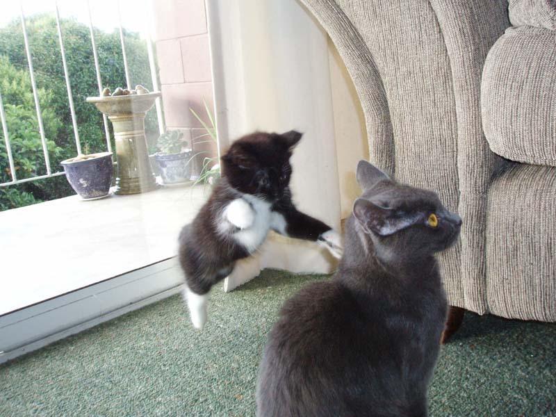 Timing perfeito - Fotos felinas tiradas no momento exato 5 18