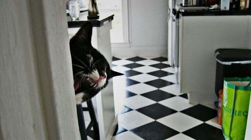 Timing perfeito - Fotos felinas tiradas no momento exato 5 19