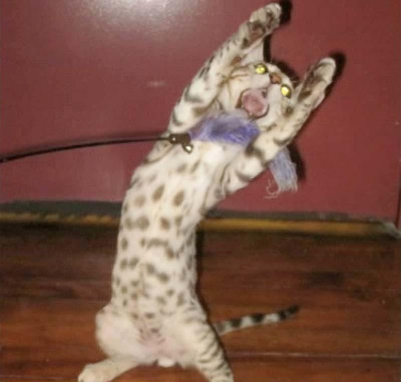 Timing perfeito - Fotos felinas tiradas no momento exato 5 21