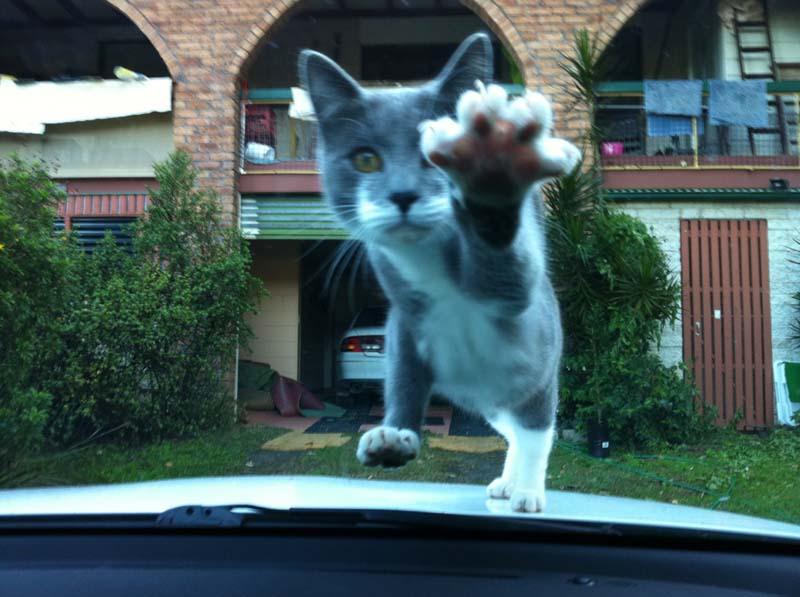 Timing perfeito - Fotos felinas tiradas no momento exato 5 22
