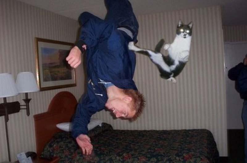 Timing perfeito - Fotos felinas tiradas no momento exato 5 23