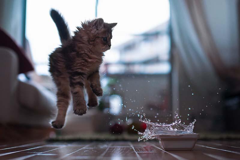 Timing perfeito - Fotos felinas tiradas no momento exato 5 24