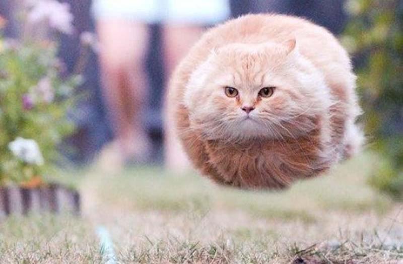 Timing perfeito - Fotos felinas tiradas no momento exato 5 26