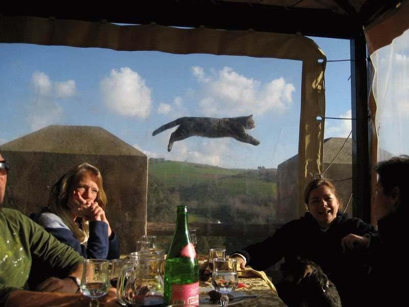 Timing perfeito - Fotos felinas tiradas no momento exato 5 27