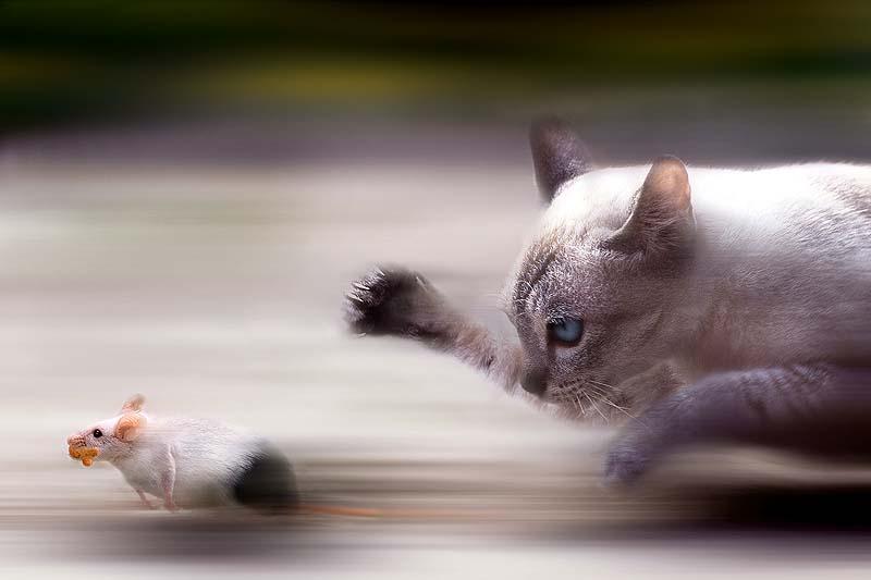 Timing perfeito - Fotos felinas tiradas no momento exato 5 30