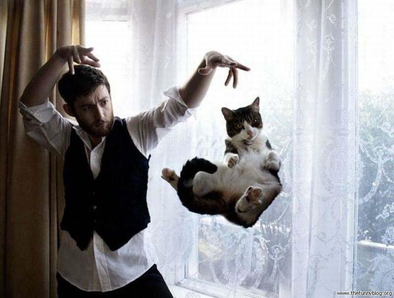 Timing perfeito - Fotos felinas tiradas no momento exato 5 31
