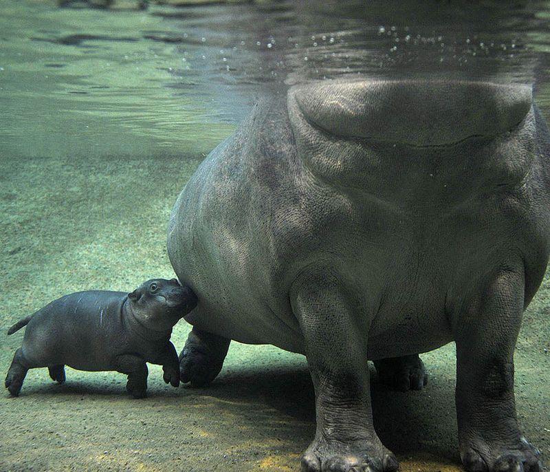 Os 10 maiores animais terrestres