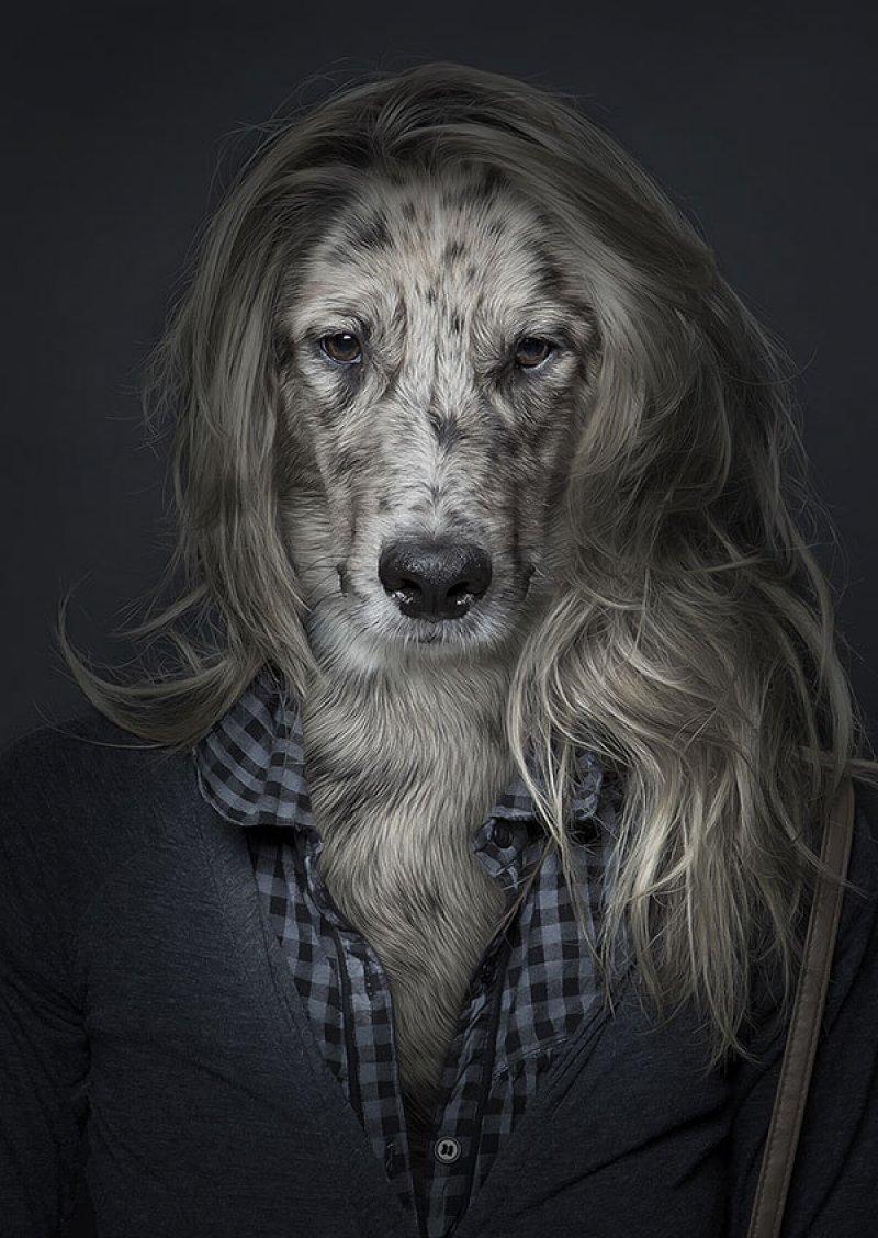 Retratos engraçados de cães vestidos como seres humanos 01