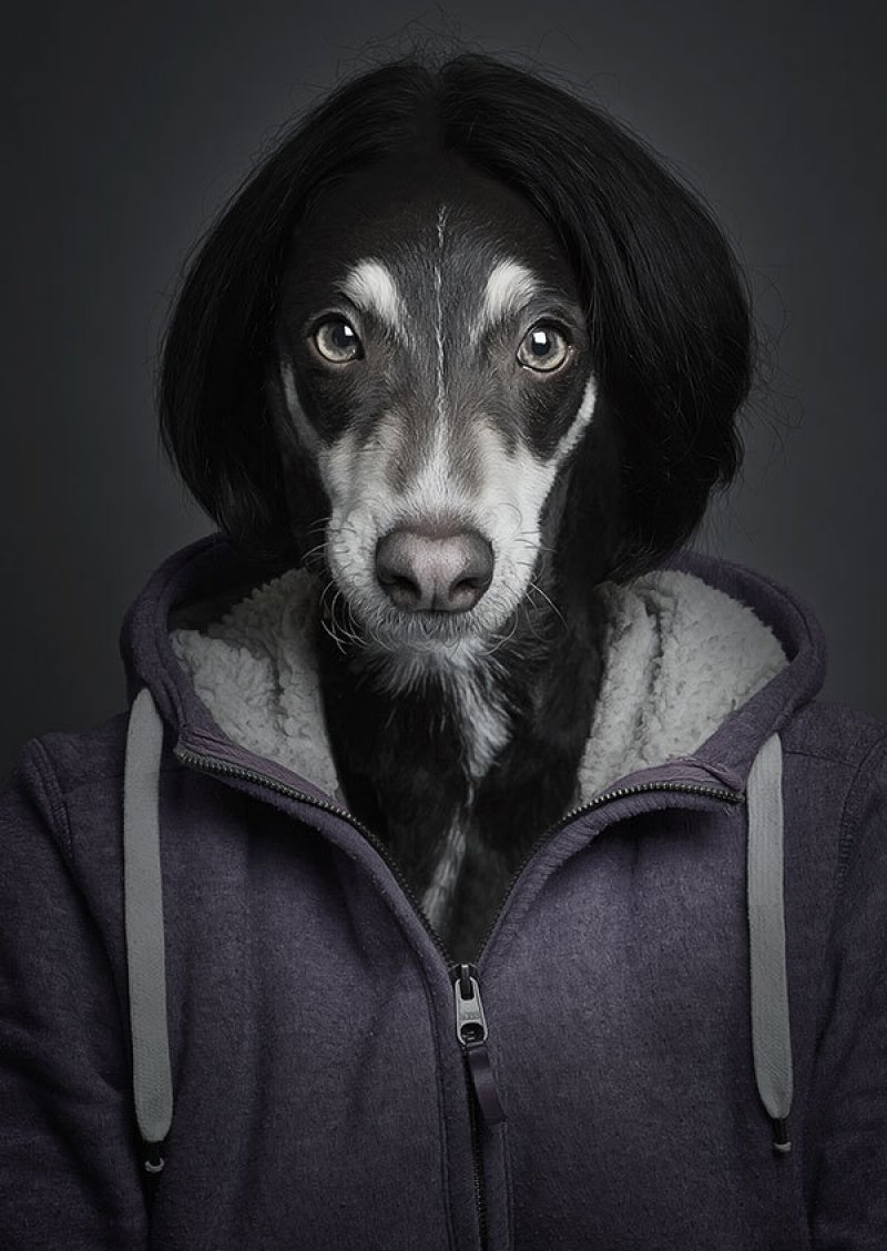Retratos engraçados de cães vestidos como seres humanos 03