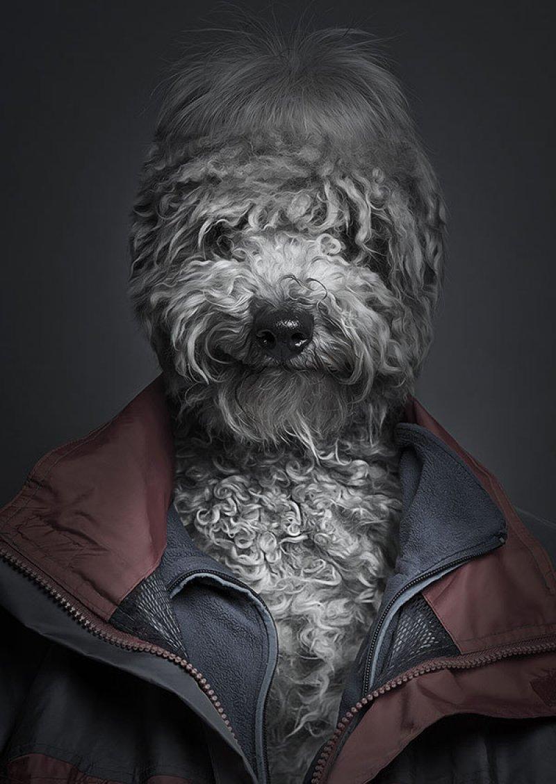 Retratos engraçados de cães vestidos como seres humanos 05