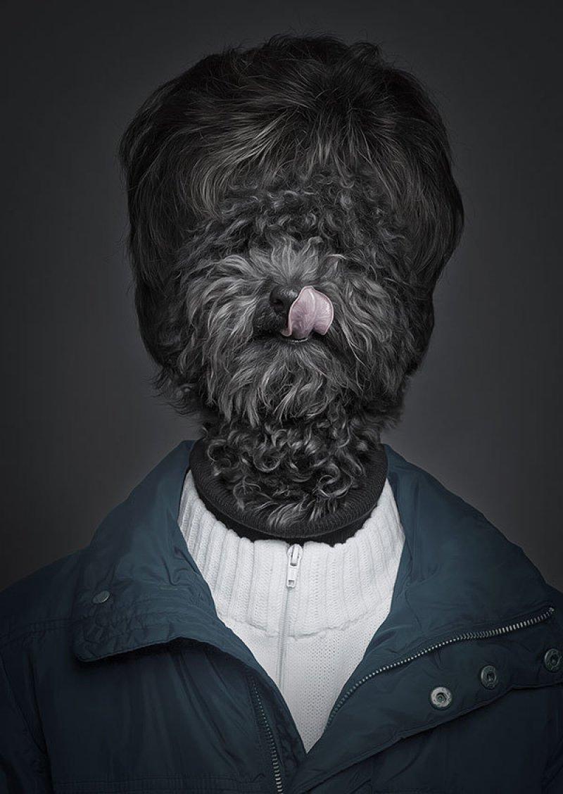 Retratos engraçados de cães vestidos como seres humanos 07