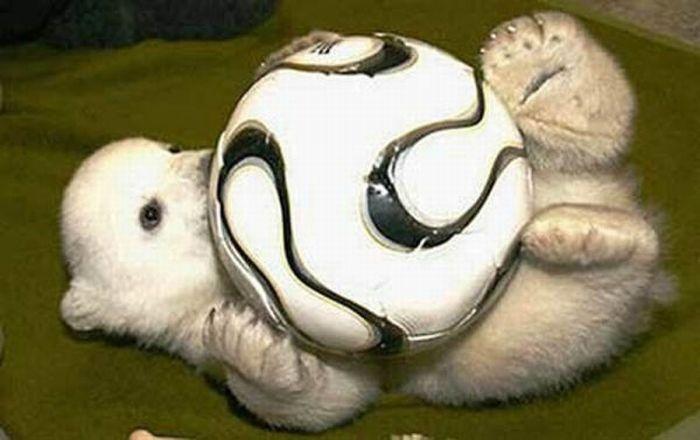 A vida e morte de Knut, o urso polar 01
