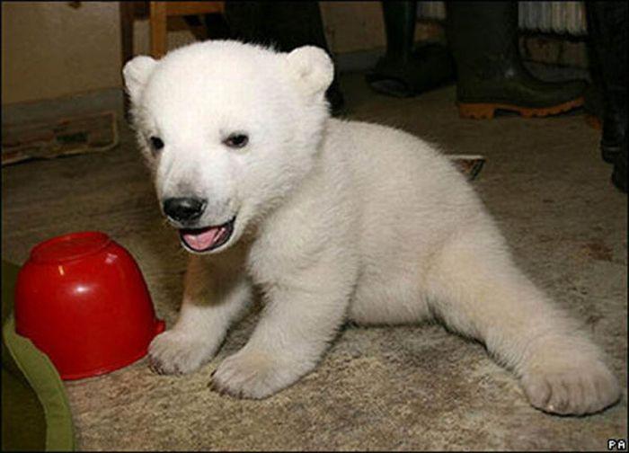 A vida e morte de Knut, o urso polar 03