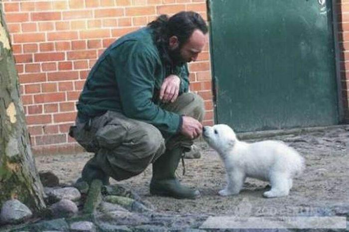 A vida e morte de Knut, o urso polar 10