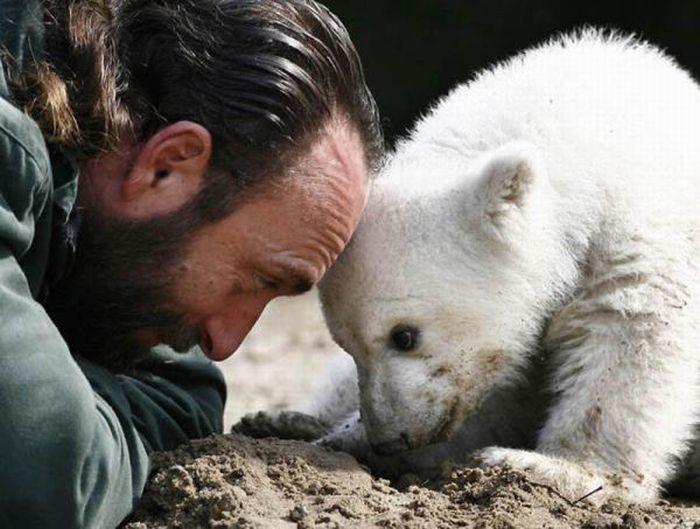 A vida e morte de Knut, o urso polar 11