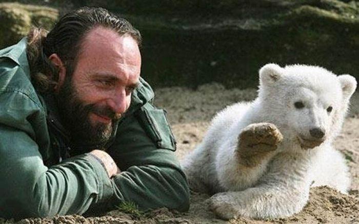 A vida e morte de Knut, o urso polar 12