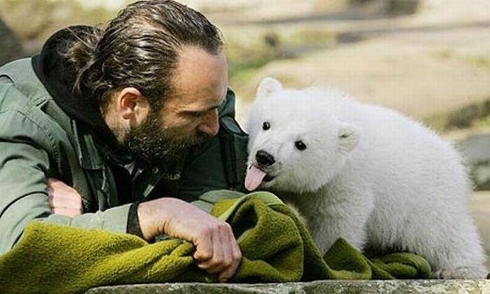 A vida e morte de Knut, o urso polar 13