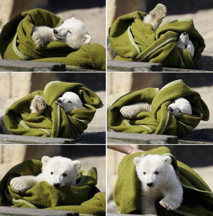 A vida e morte de Knut, o urso polar 14
