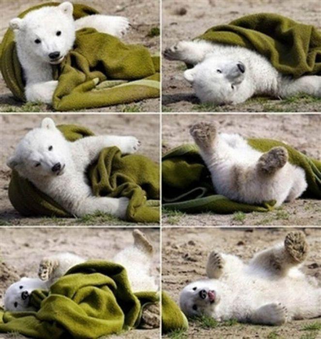 A vida e morte de Knut, o urso polar 15