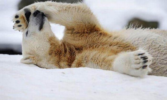 A vida e morte de Knut, o urso polar 30