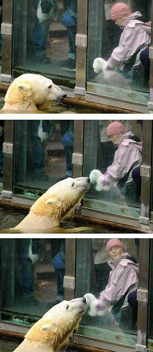 A vida e morte de Knut, o urso polar 32