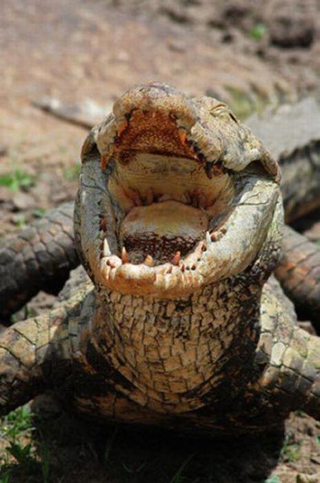 Vila Paga, um lugar onde crocodilos e homens vivem em perfeita harmonia 03