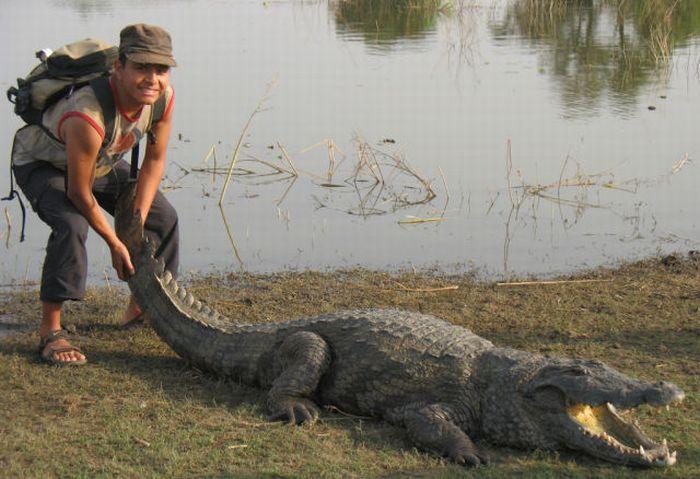 Vila Paga, um lugar onde crocodilos e homens vivem em perfeita harmonia 09