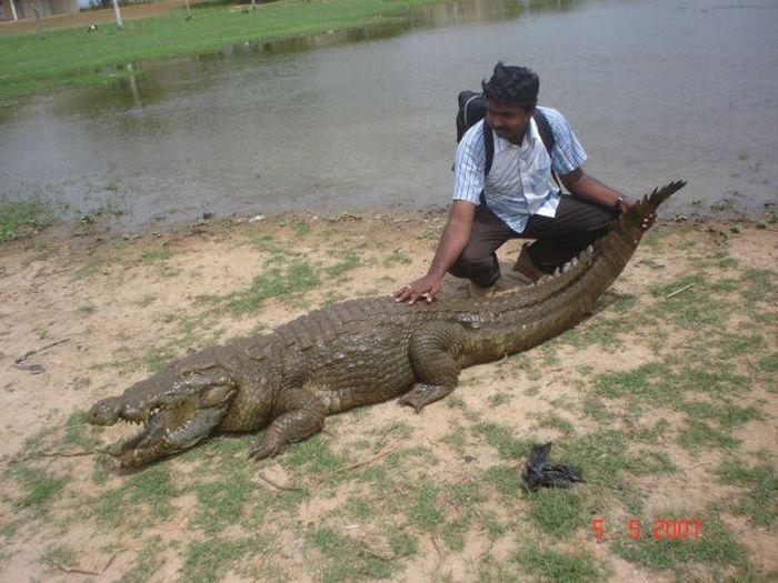Vila Paga, um lugar onde crocodilos e homens vivem em perfeita harmonia 16