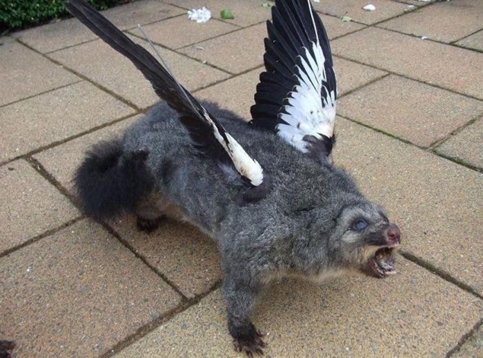 As assustadoras criaturas do taxidermista maluco 06