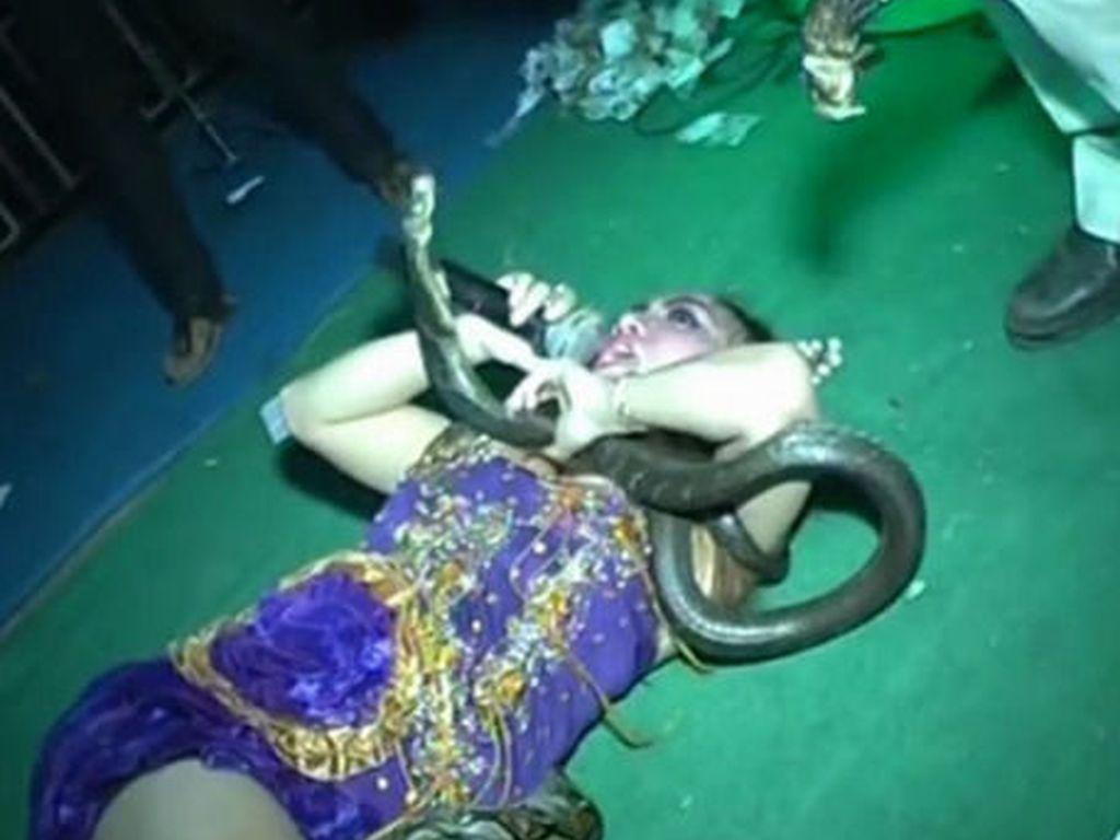 Cantora indonésia picada por cobra-real continua cantando e morre no palco
